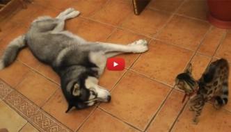 Gatti infastiditi dallo smielato affetto dei cani [VIDEO]