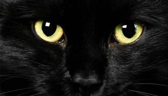 """La bella iniziativa: """"Adotta un gatto nero"""""""