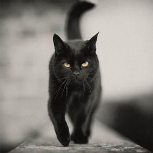 gatto nero solstizio