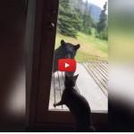 C'è un orso in veranda, il gatto lo caccia via! [VIDEO]