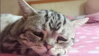 Luhu, il gatto col musetto imbronciato