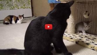 Il duro mestiere di mamma gatta [VIDEO]