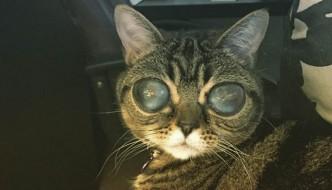 Matilda, la gatta con gli occhi grandi e malinconici