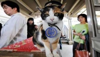 E' morta Tama, la gatta della ferrovia