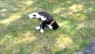 Abbi, il gatto che ha sventato molte rapine