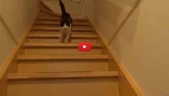 Umano torna a casa, l'accoglienza del gatto è commovente [VIDEO]