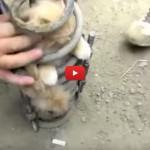 Gatto incastrato nell'ammortizzatore viene salvato [VIDEO]