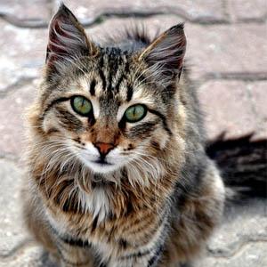 amore gatto modi