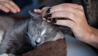 La scienza dice come si accarezzano i gatti