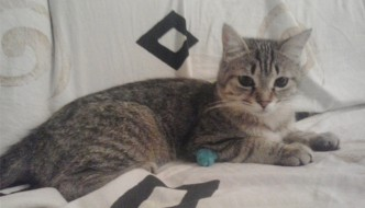 Salvata Elsa, la gatta intrappolata nella metro di Roma