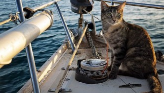 Coppia molla tutto e inizia a viaggiare in barca con la gatta
