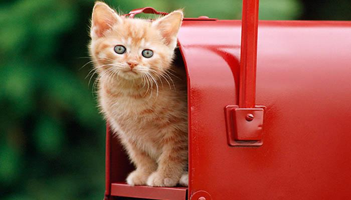 Gattina nella cassetta della posta, la adotta il postino