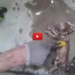 Gattino estratto dalle tubature viene rianimato [VIDEO]