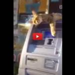 """""""Il gatto greco"""" che non fa prelevare al bancomat [VIDEO]"""