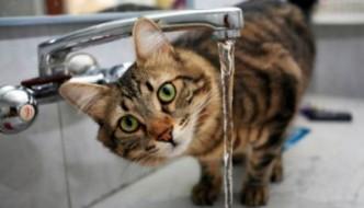 Gatti, attenti ai colpi di calore!