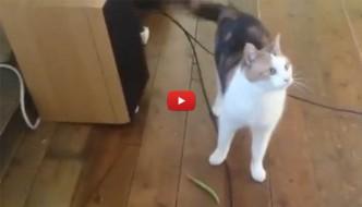 Il gatto da riporto, ma solo coi fagiolini [VIDEO]