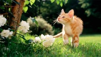 I consigli di dottor miao archives pagina 2 di 4 amoremiao - Allontanare i gatti dal giardino ...