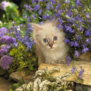 gatto giardino
