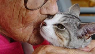 Un gatto vive al pronto soccorso: l'opinione della gente si divide