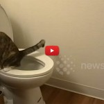 Bon ton felino ecco 10 regole - Gatto pipi letto ...