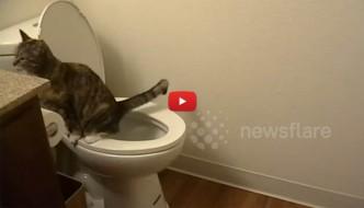 Gatto fa pipì nel water, ma solo di nascosto [VIDEO]