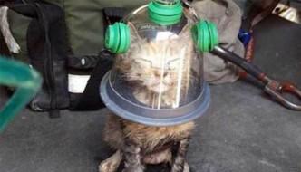 Stubby, il gatto salvato da una maschera d'ossigeno