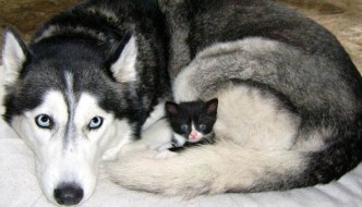 Cala il randagismo: gatti e cani più sicuri