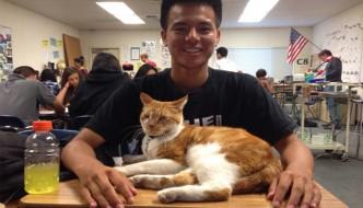 Una scuola adotta il gatto Bubba