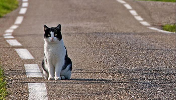 Abbandoni estivi aumentano quelli di gatti for Youtube cani e gatti