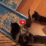 Restare svegli senza caffè? Con i video di gattini si può! [VIDEO]