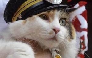 Dopo Tama ecco Nitama, la gatta della stazione.
