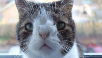 Monty, il gatto con la sindrome di Down che nessuno voleva