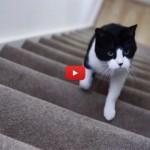 Il gatto è la sveglia più puntuale che ci sia [VIDEO]