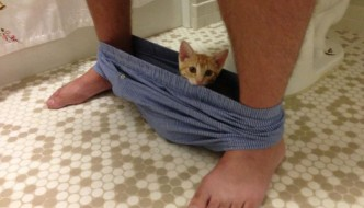 I gatti ci stanno accanto nel momento del…bisogno!