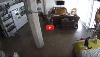 Cane e gatto soli in casa: il primo abbaia, l'altro lo zittisce [VIDEO]