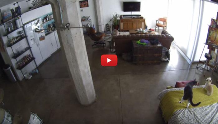 Cane e gatto soli in casa: il primo abbaia, laltro lo zittisce [VIDEO]