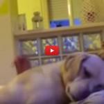Ettore, il cane che chiede scusa, ha conquistato il web [VIDEO]