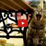 """Ecco """"Cat street view"""", la città a misura di gatto [VIDEO]"""
