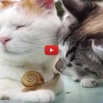 I gatti non torcerebbero un capello neanche a una lumaca [VIDEO]