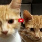 Le due sorelline inseparabili del rifugio di Fayetteville [VIDEO]