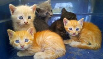 Mamma gatta investita, vigili salvano 5 gattini