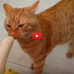 Mai offrire una banana a un gatto! [video]