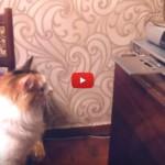 Il gatto se la prende con il carrello del CD