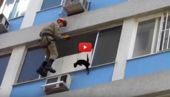Gatto al sesto piano salvato dai pompieri [VIDEO]