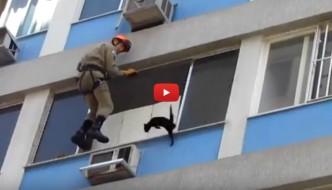 Gatto al sesto piano salvato dai pompieri [VIDEO]