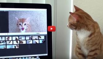 Sai comprendere e distinguere le emozioni del tuo gatto? [VIDEO]