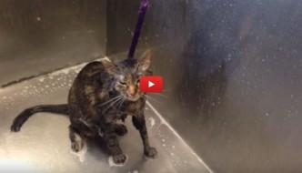 Il gatto parlante: «Non voglio fare il bagnetto»!