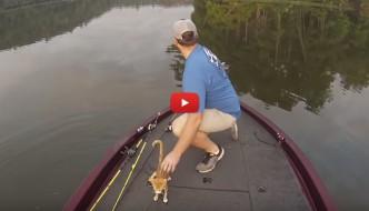 Fa un giro in barca e pesca…un gattino abbandonato! [VIDEO]