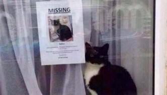 Gatto smarrito viene ritrovato accanto al volantino che lo ritrare