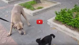 Mamma gatta rischia la vita per i suoi cuccioli [VIDEO]